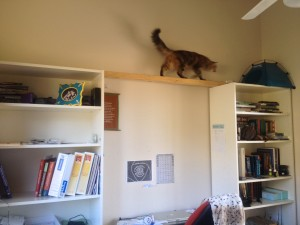 A simple task of a cheap beam of strong wood between the bookshelves means that Freddie has access to both bookshelves. She can sit in her dome and view the world outside the window.